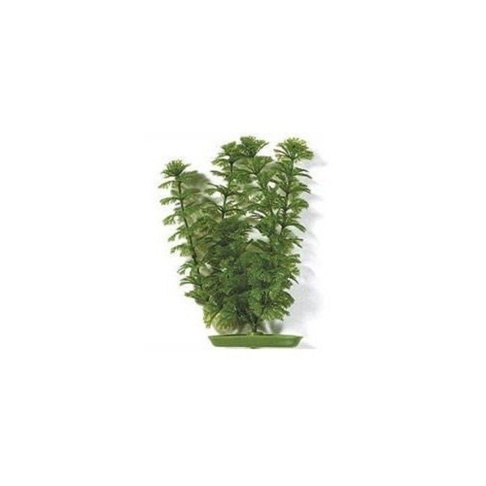 Rostlina Ambulia 20cm Ostatní