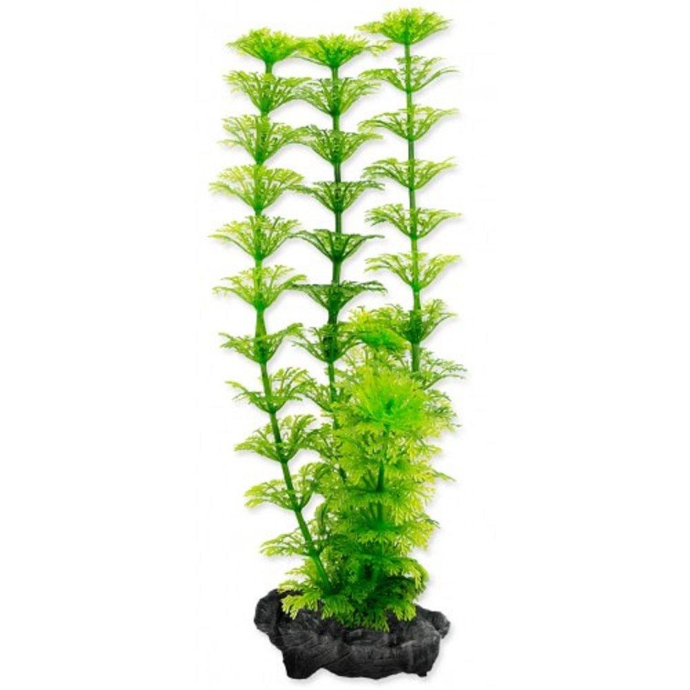 Rostlina Ambulia Tetra S 15cm Ostatní