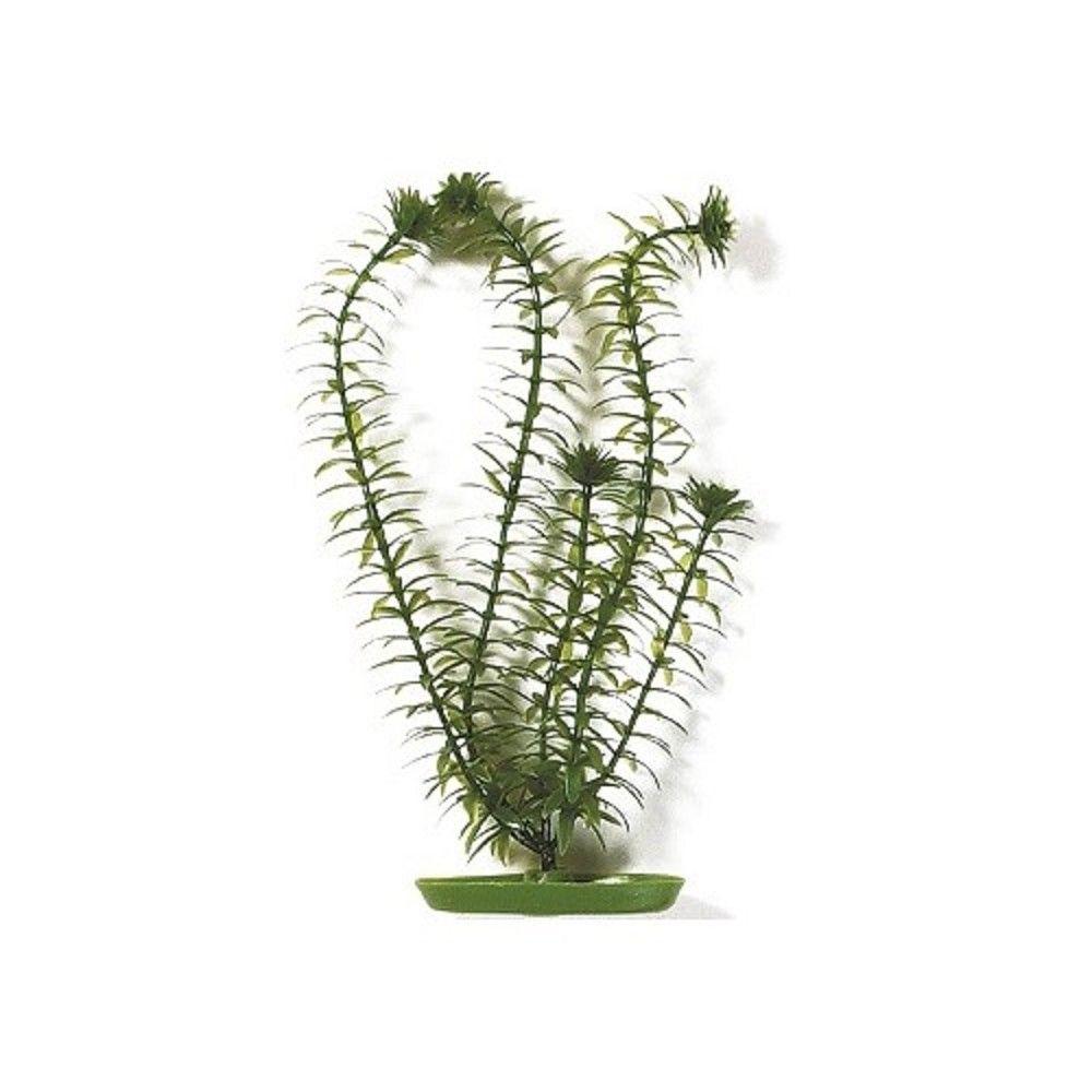 Rostlina Anacharis 13cm Ostatní