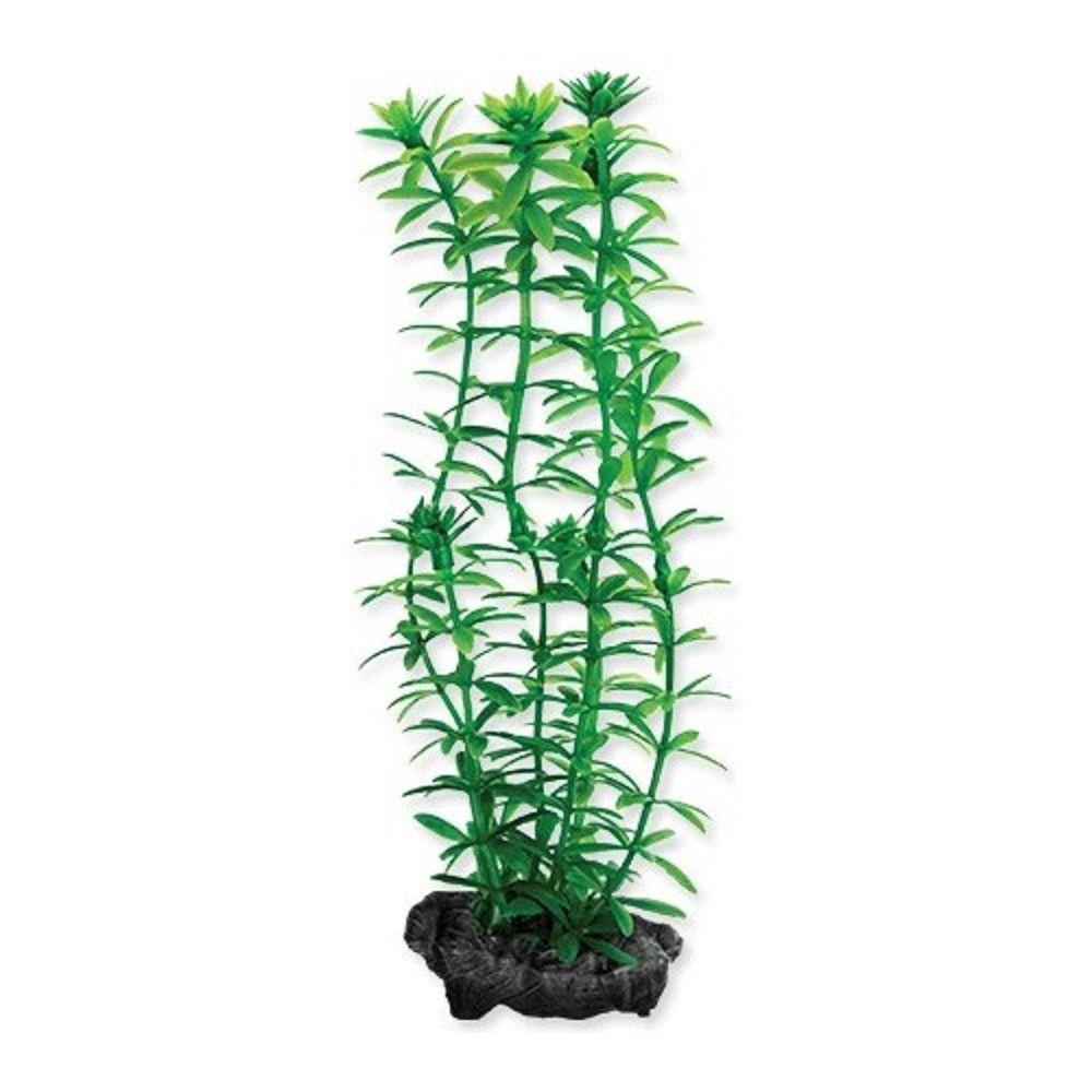 Rostlina Anacharis Tetra S 15cm Ostatní