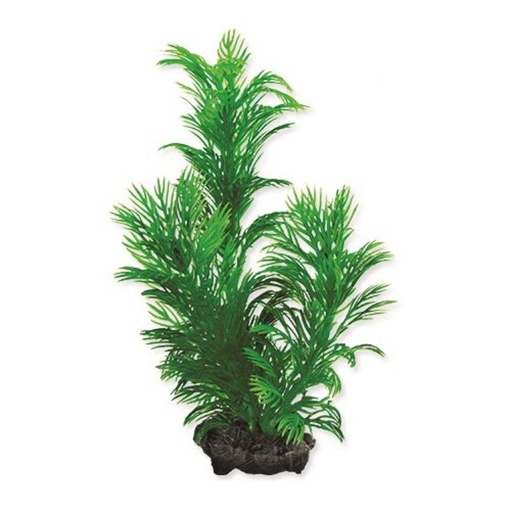 Rostlina Green Cabomba S 15cm Ostatní