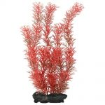 Rostlina Red Foxtail 30cm