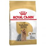 RC  7,5kg mini Adult yorkshire dog